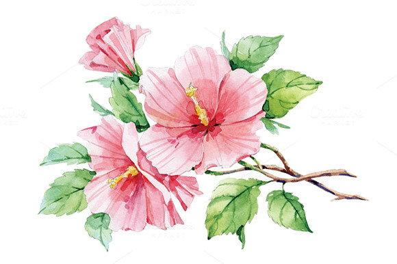 pink hibiscus f