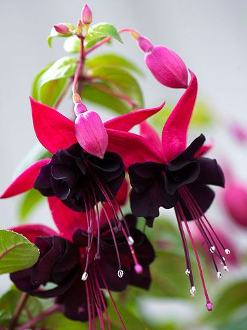 stunning-flower-garden-with-fuchsia-easy-project-to-decor-a-botanical-backyard-14.jpg