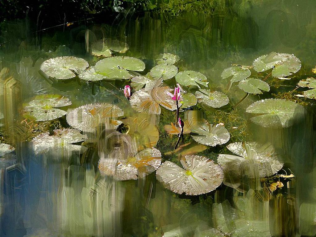 Anthonore-Christensen-Lotus-pond.jpg