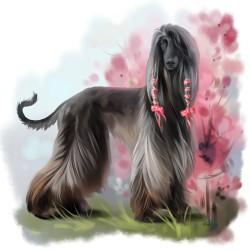 Afghan-hound.th.jpg