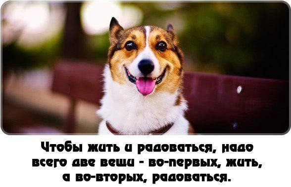 SOBAKIN-PROSTO-8.jpg